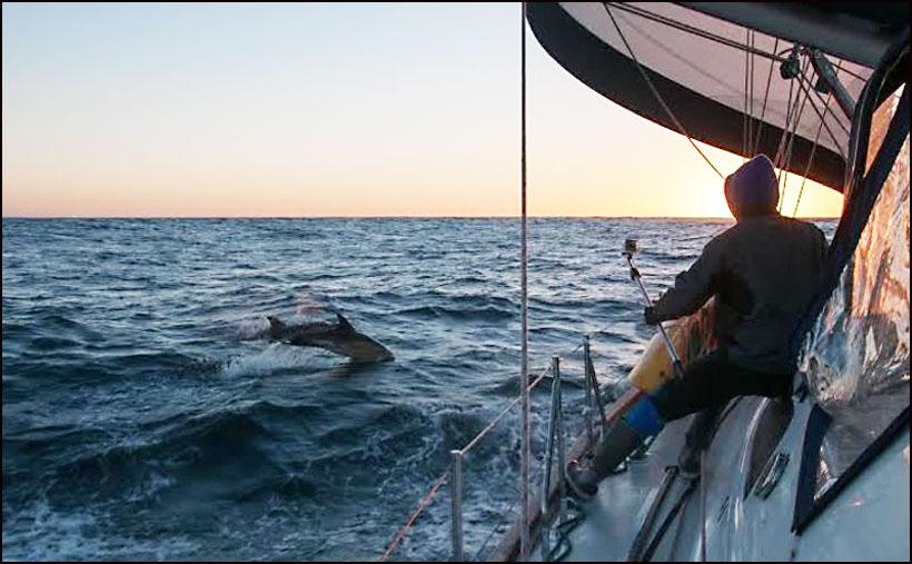 Delfini su ih stalno pratili© Dušan Lazarević