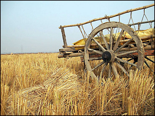 poljoprivreda-1