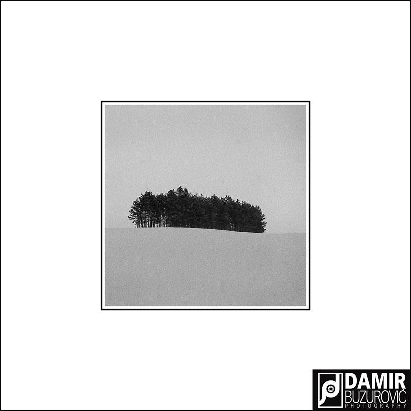 Damir-GOLD-UPI-za-fotografiju-WOOD-2