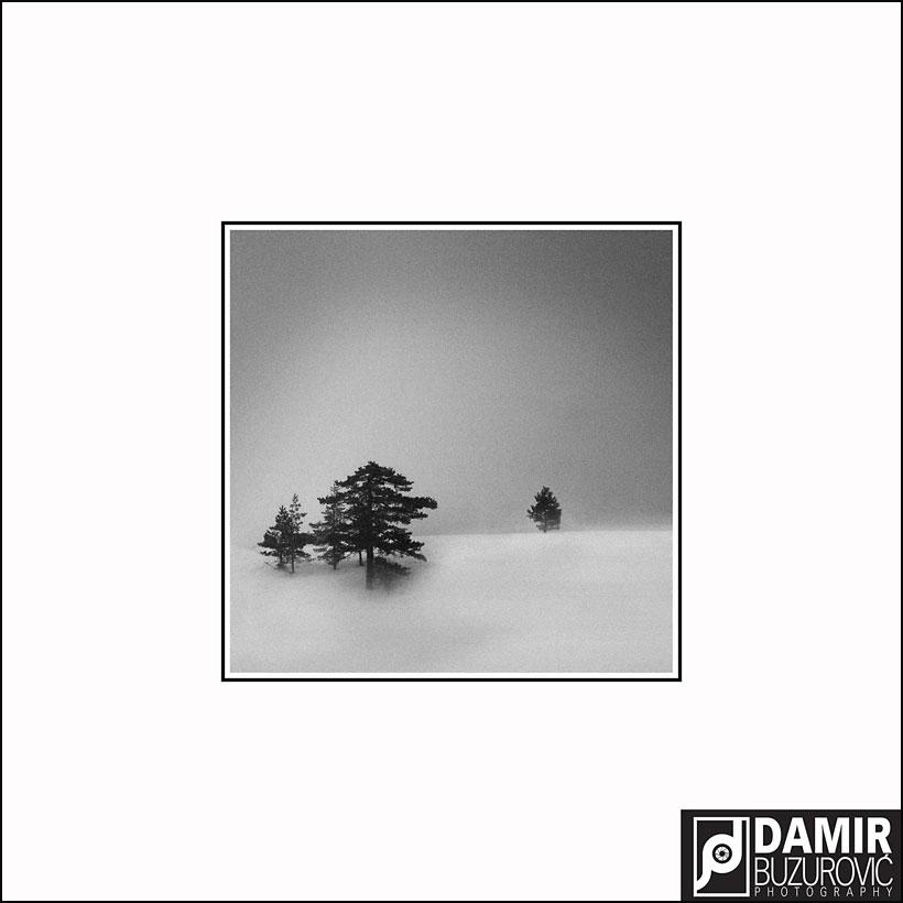 Damir-Zlatna-FIAP-medalja-za-fotografiju-WOOD-7