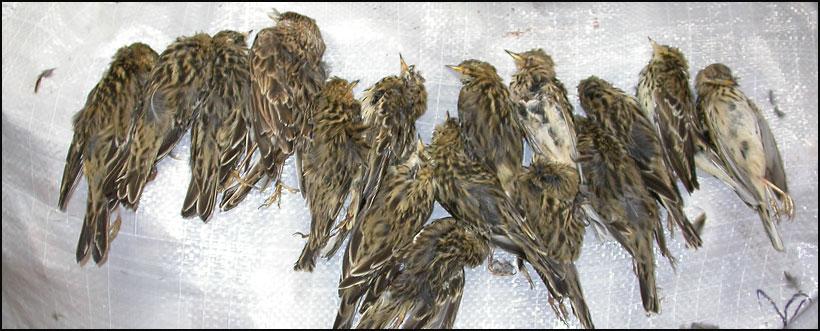 ptice-2