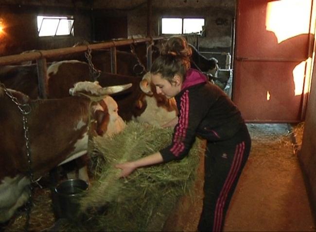 Jovana hrani krave - Foto N. Božovic