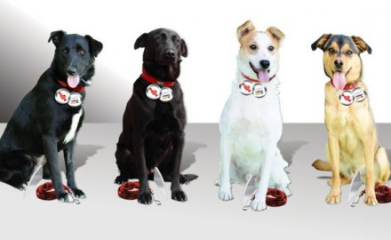 Psi. izložba