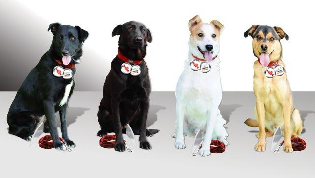 psi zivotinje