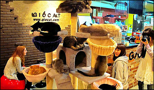 cafe-Gio-cat