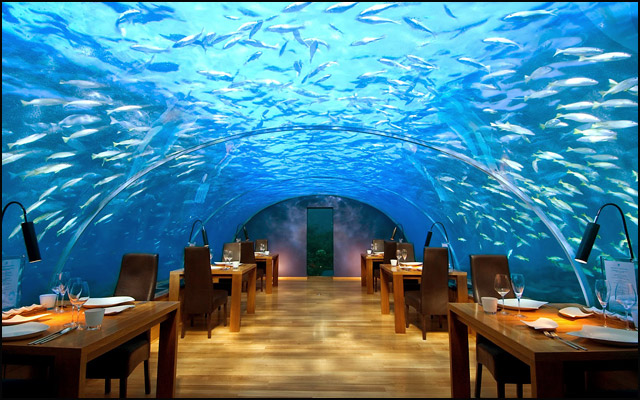 cafe-Red-Sea-Star