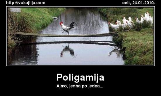 poligamija-1