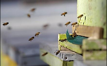 pčele, košnice