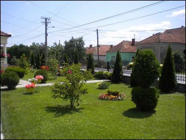 zeleni-Najlepse-dvoriste-porodice-Vulicevic
