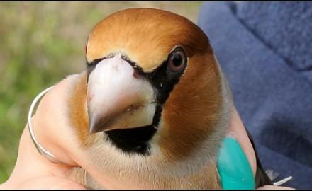 ptica
