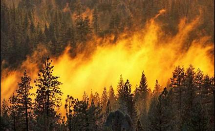 požar u šumi