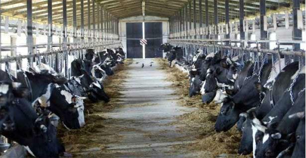 farma, mrcajevci