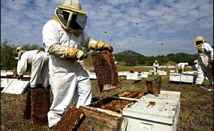 pčelari-3