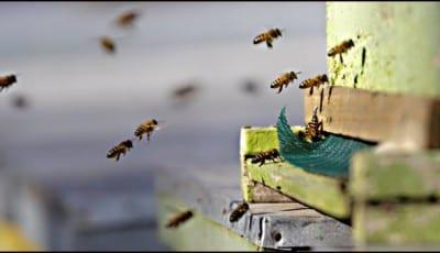 pčelari-4