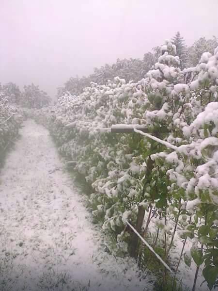 sneg, malinjaci