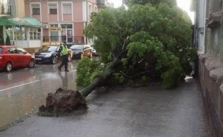 oboreno stablo