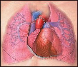 pluća-2