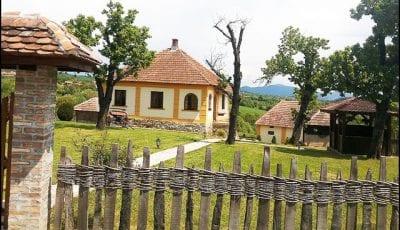 milan-obradovic-3
