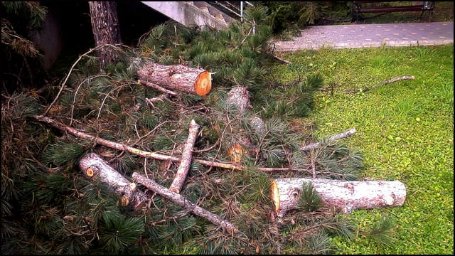 drvo-8
