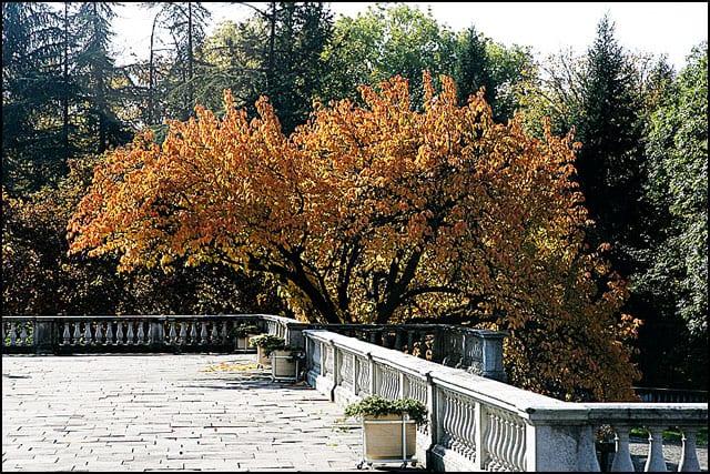 jesen-3