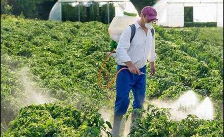 Pesticidi-sve-prisutniji-u-Zapadnoj-Moravi