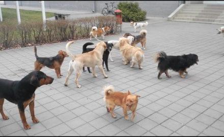 psi-lutalice-Agronomski