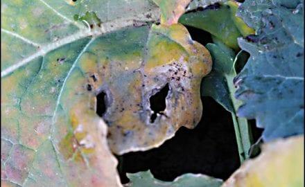 biljke-1