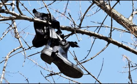 rad-Have-we-waged-war-on-trees,-autor-Lazar-Ilić