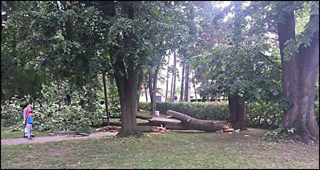 drvo-2-Foto-Aleksandar-Mitrović