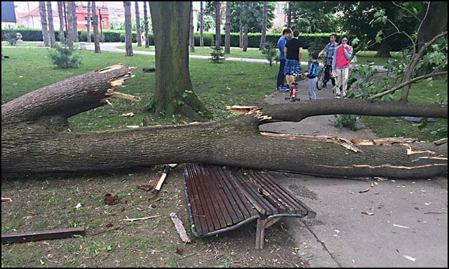 drvo-3-Foto-Aleksandar-Mitrović