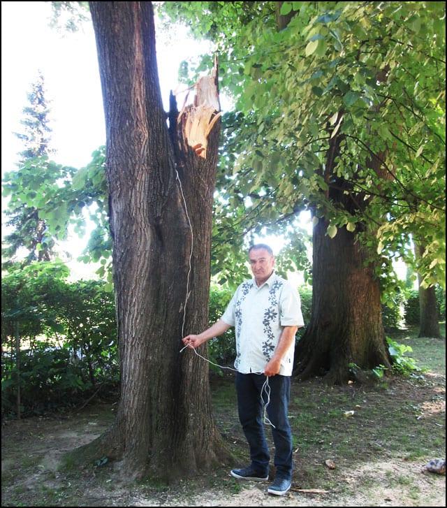 drvo-Protka-2