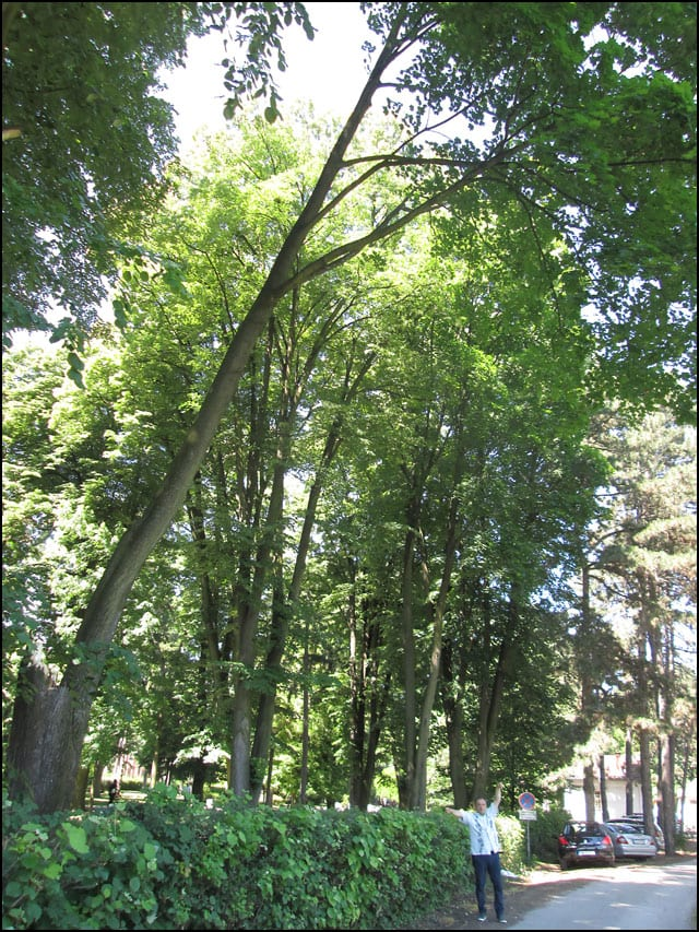 drvo-Protka-3