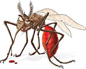 komarac-mosquito