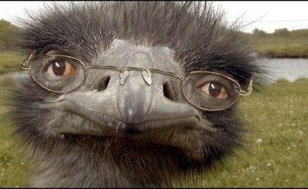 noj-naočari