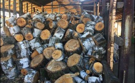 drvoseče-1