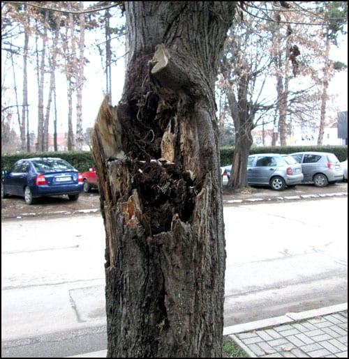 drvoseče-2s