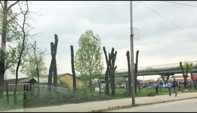 drvoseče-2a