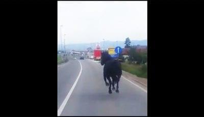 konj-na-magistrali