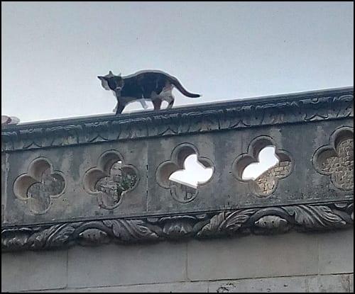 dubrovnik-mačka
