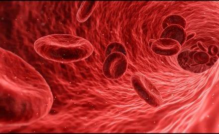 eritrociti-jugolab