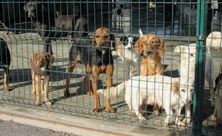 Azil za životinje