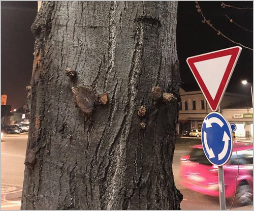 drvo-3
