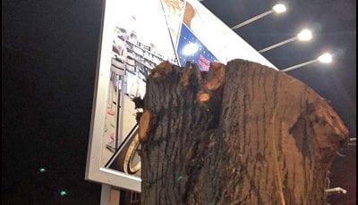 drvo-4