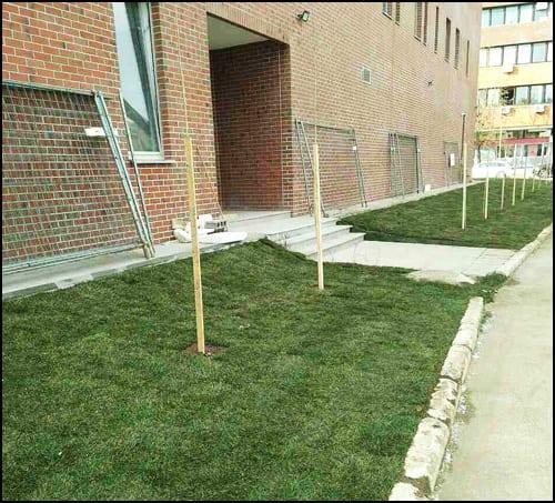 biblioteka-trava