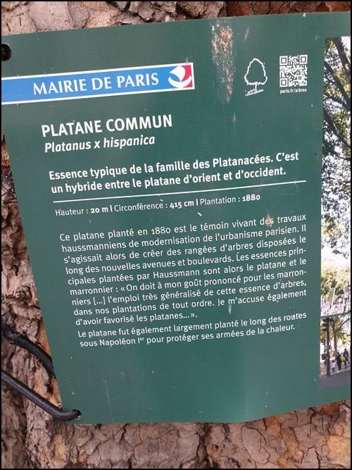 platan-pariz-3