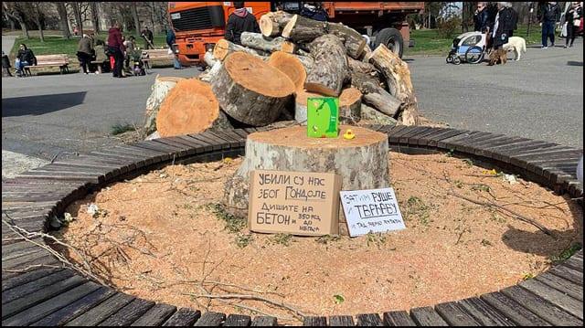drvece-seca