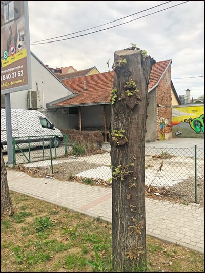 drvo-2
