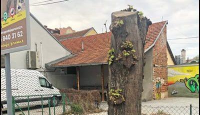 drvo-2aa
