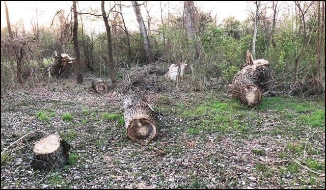 drvoseče-3