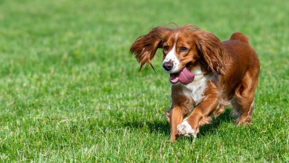 pas trči kroz travu